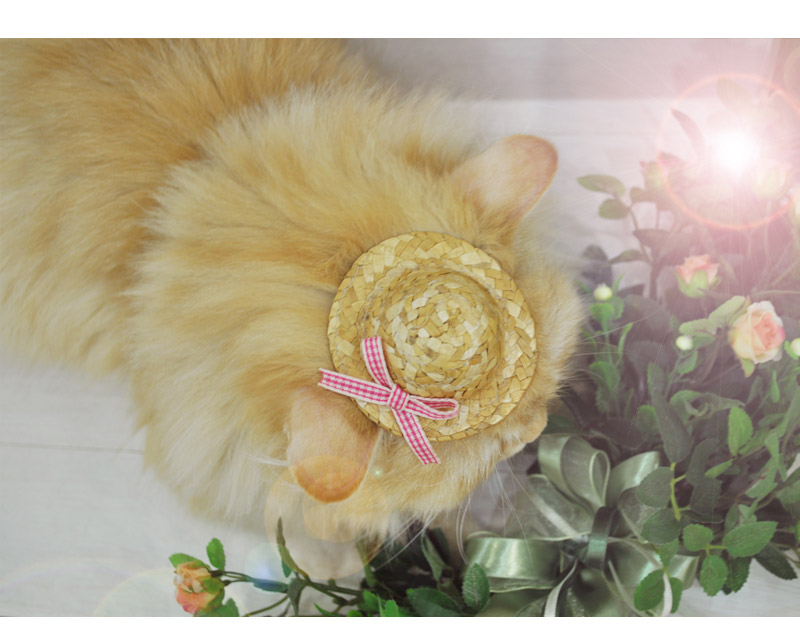 pet accessories for cat